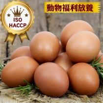 免運【ISO認證人道飼養紅殼蛋】30顆/盒/6箱一組