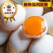 免運【ISO認證人道飼養烏骨雞蛋】24顆/盒/4箱一組